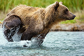 BEA 03 MC0007 01