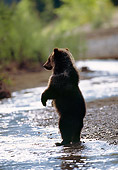 BEA 03 MC0011 01