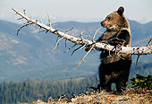 BEA 03 MC0015 01