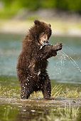 BEA 03 MC0020 01