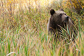 BEA 03 MC0027 01