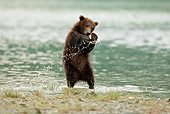BEA 03 MC0032 01