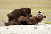 BEA 03 MC0035 01