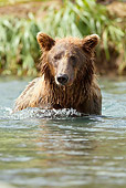 BEA 03 MC0045 01