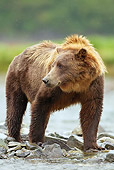 BEA 03 MC0051 01