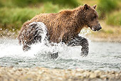 BEA 03 MC0064 01