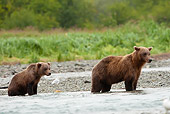 BEA 03 MC0067 01
