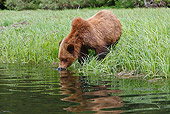 BEA 03 WF0002 01