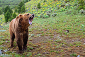 BEA 03 WF0004 01