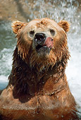 BEA 03 GR0002 01