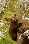 BEA 03 JM0004 01