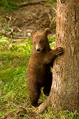 BEA 03 JM0005 01