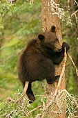 BEA 03 JM0007 01