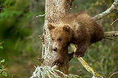 BEA 03 JM0008 01