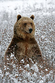 BEA 03 KH0002 01