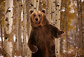 BEA 03 RK0024 01