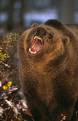 BEA 03 RK0040 02