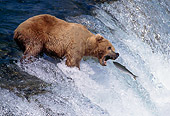 BEA 03 TK0004 01
