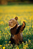 BEA 03 TK0007 01