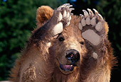 BEA 03 TK0010 01