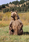 BEA 03 TK0015 01