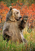 BEA 03 TK0020 01
