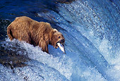BEA 03 TL0004 01