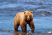 BEA 03 TL0012 01