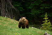 BEA 03 TL0019 01