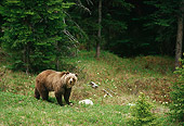 BEA 03 TL0021 01