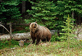 BEA 03 TL0022 01