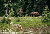 BEA 03 TL0023 01