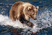 BEA 04 MC0001 01