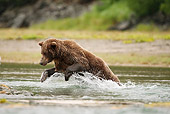 BEA 04 MC0002 01