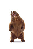 BEA 04 RK0022 03