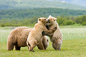 BEA 04 NE0002 01