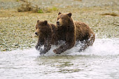 BEA 04 NE0004 01
