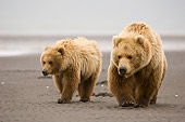 BEA 04 NE0005 01