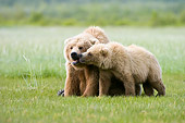 BEA 04 NE0011 01