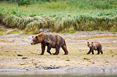 BEA 04 NE0012 01