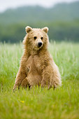 BEA 04 NE0014 01
