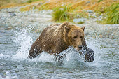 BEA 04 NE0022 01