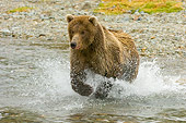 BEA 04 NE0023 01