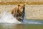 BEA 04 NE0024 01