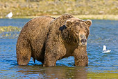 BEA 04 NE0029 01