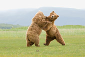 BEA 04 NE0034 01