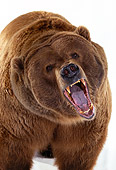 BEA 04 RK0014 03