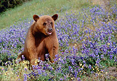 BEA 05 RK0004 07