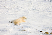 BEA 06 DA0006 01