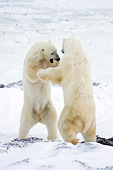 BEA 06 DA0009 01
